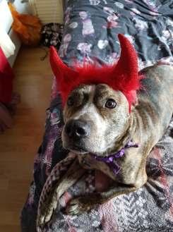 Bouncer the Devil